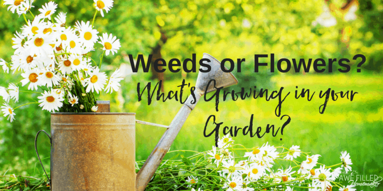 Weeds or Flowers? What's Growing in Your Garden….