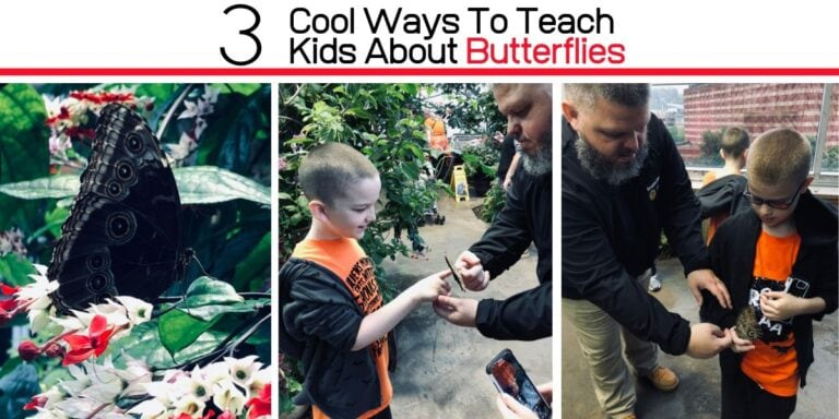 Three Cool Ways To Teach Kids About Butterflies