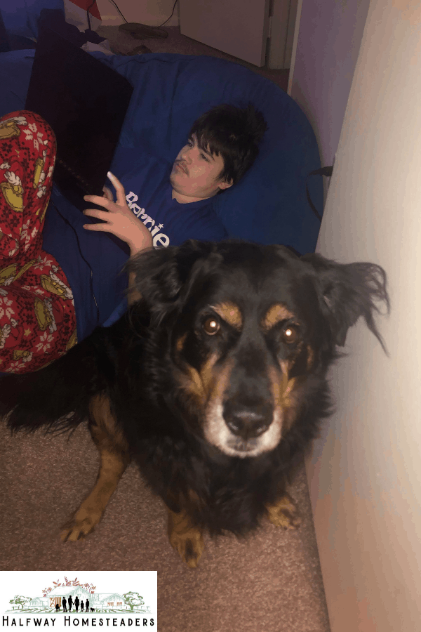 The joys of Long-haired rotties