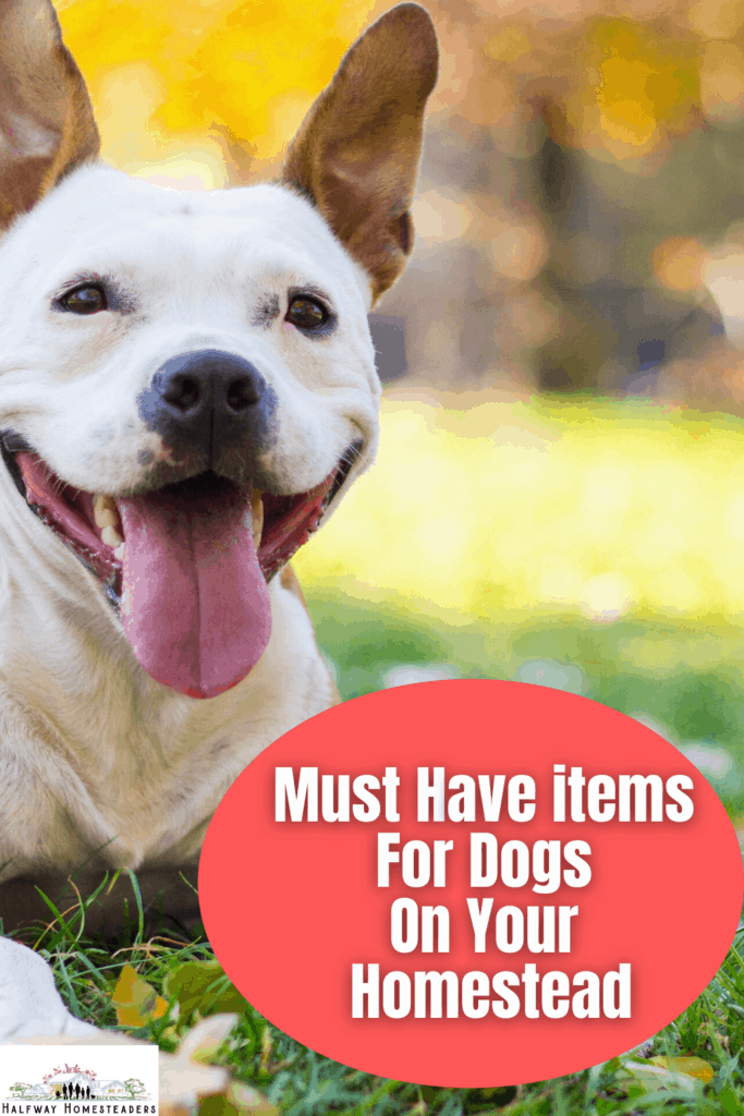 Must Have Items For Dogs On Your Homestead