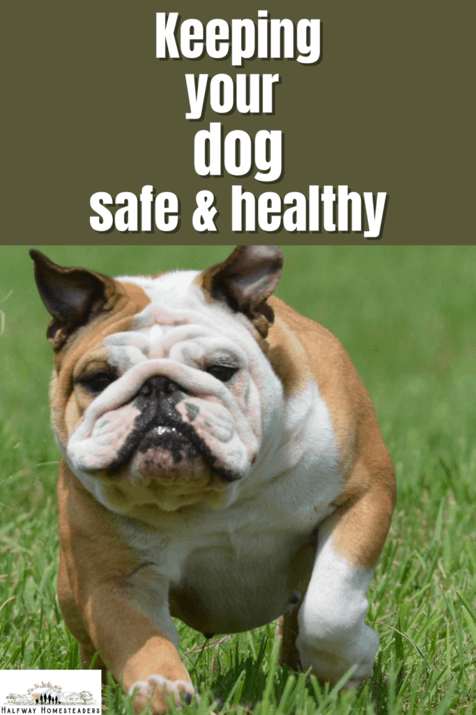 keeping dogs safe